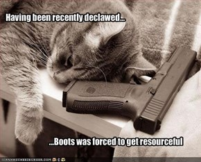Having been recently declawed...