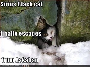 Sirius Black cat finally escapes  frum Askaban