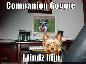 Companion Goggie  I findz him