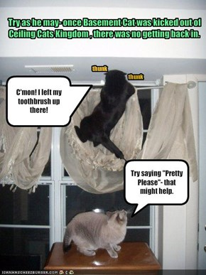 Try as he may- once Basement Cat was kicked out of Ceiling Cats Kingdom , there was no getting back in.