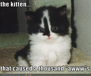 "the kitten.....  that caused a thousand ""awww""s"