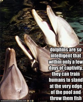dolphins are so intelligent that within only a few days of captivity, they can train humans to stand at the very edge of the pool and throw them fish