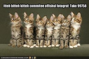 Itteh bitteh kitteh commitee offishul fotograf: Take 99758