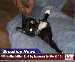 Breaking News - Nutha kitteh kild by hooman tonite @ 10