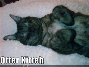 Otter Kitteh