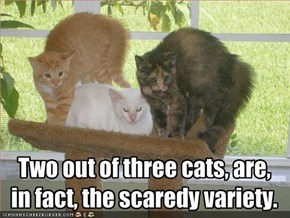 Two out of three cats, are, 