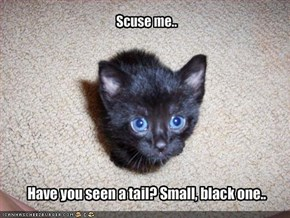 Have you seen a tail? Small, black one..