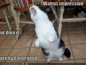 Walrus impression ur doin it... pretty damn good