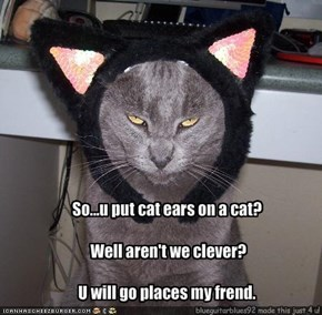 So...u put cat ears on a cat?