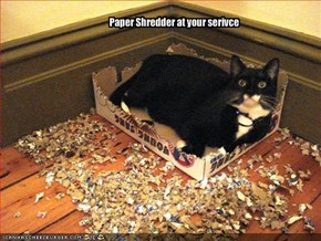 Paper Shredder at your serivce