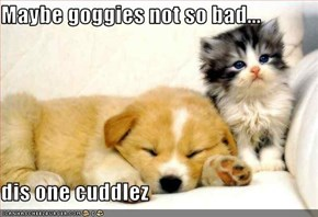 Maybe goggies not so bad...  dis one cuddlez