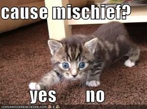 cause mischief?          yes        no