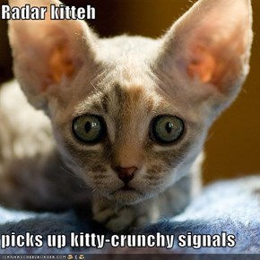 Radar kitteh  picks up kitty-crunchy signals