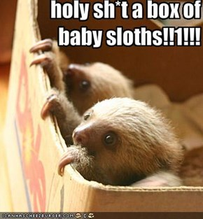 holy sh*t a box of baby sloths!!1!!!