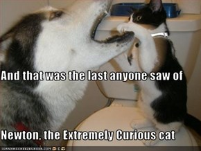 And that was the last anyone saw of  Newton, the Extremely Curious cat