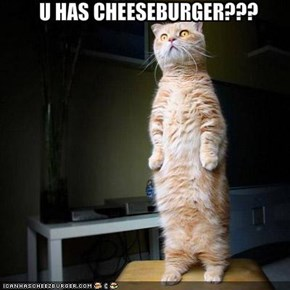 U HAS CHEESEBURGER???