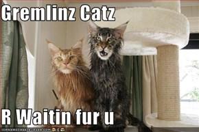 Gremlinz Catz  R Waitin fur u