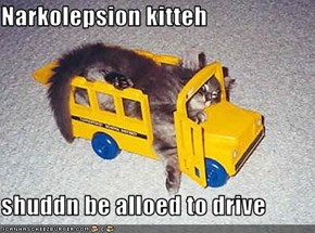 Narkolepsion kitteh  shuddn be alloed to drive