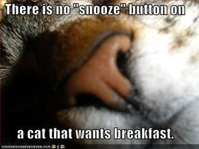 "There is no ""snooze"" button on   a cat that wants breakfast."