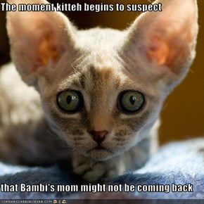 The moment kitteh begins to suspect  that Bambi's mom might not be coming back