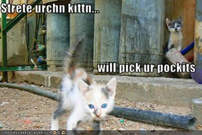 Strete urchn kittn... will pick ur pockits