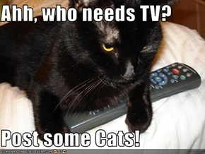 Ahh, who needs TV?  Post some Cats!