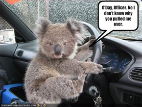 G'Day, Officer. No I don't know why you pulled me over.