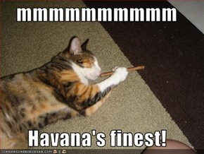 mmmmmmmmmm  Havana's finest!