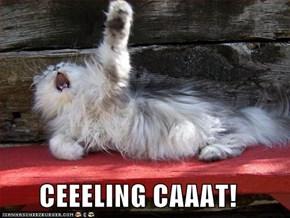CEEELING CAAAT!