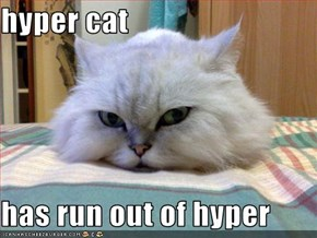 hyper cat  has run out of hyper