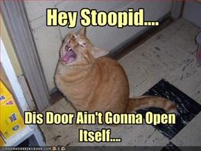 Hey Stoopid....