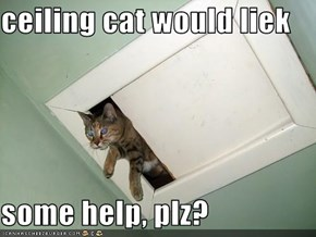 ceiling cat would liek  some help, plz?
