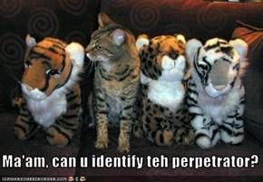 Ma'am, can u identify teh perpetrator?