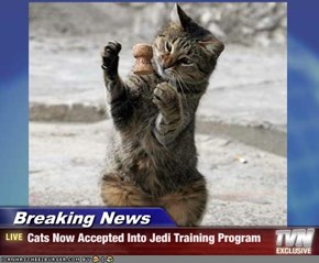 Breaking News - Cats Now Accepted Into Jedi Training Program