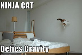 NINJA CAT  Defies Gravity
