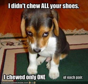 I didn't chew ALL your shoes.