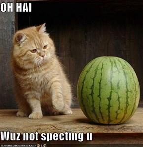 OH HAI  Wuz not specting u