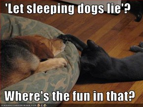 'Let sleeping dogs lie'?  Where's the fun in that?