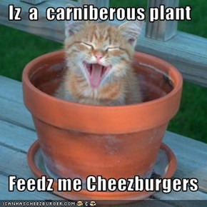 Iz  a  carniberous plant    Feedz me Cheezburgers