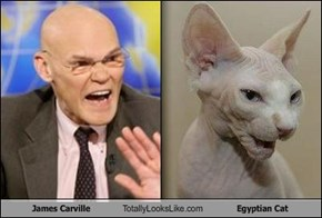 James Carville Totally Looks Like Egyptian Cat