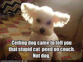 Ceiling dog came to tell you that stupid cat  peed on couch. Not dog.