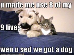 u made me use 8 of my 9 lives wen u sed we got a dog