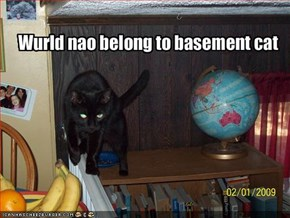 Wurld nao belong to basement cat