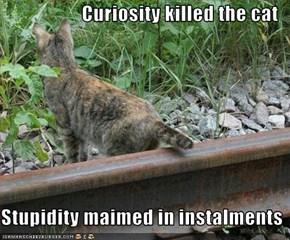 Curiosity killed the cat  Stupidity maimed in instalments
