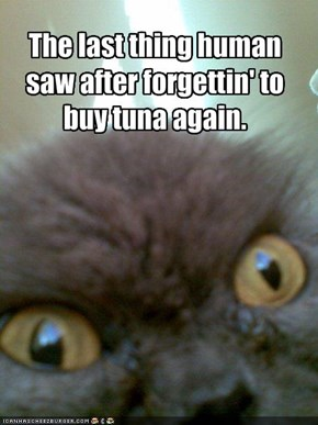 The last thing human saw after forgettin' to buy tuna again.