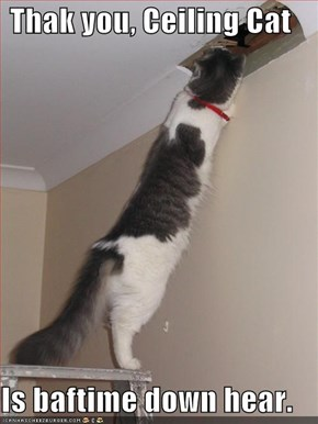Thak you, Ceiling Cat  Is baftime down hear.