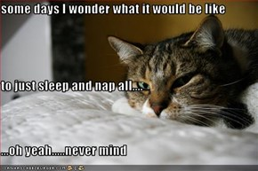 some days I wonder what it would be like to just sleep and nap all.... ...oh yeah.....never mind