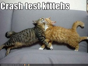 Crash test kittehs