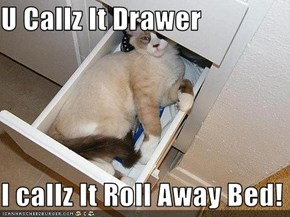 U Callz It Drawer  I callz It Roll Away Bed!
