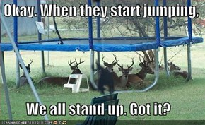 Okay. When they start jumping,  We all stand up. Got it?